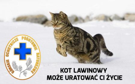 kot_lawinowy